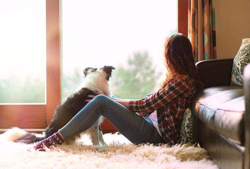 Einen Hund kaufen: Was Sie beachten sollten